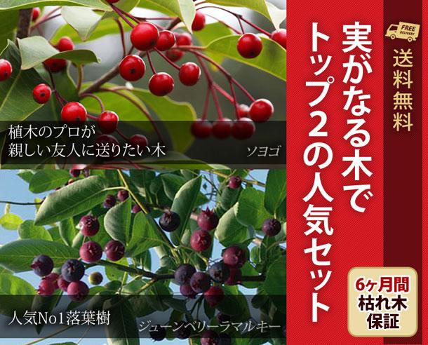 20150324blog